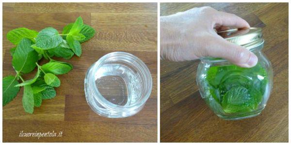 mettere le foglie di menta nell'alcol