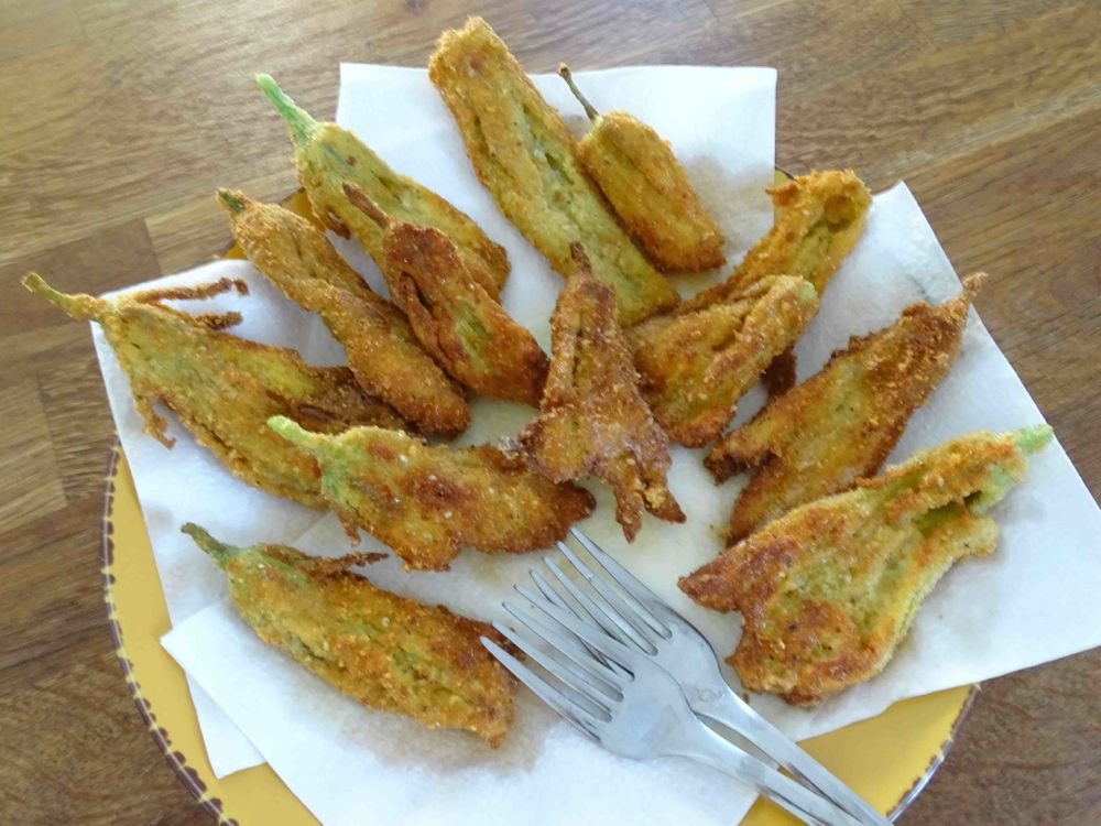 scolare fiori di zucca fritti