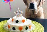 Torta di compleanno per cani